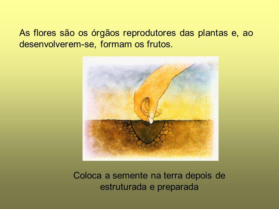 Coloca a semente na terra depois de estruturada e preparada