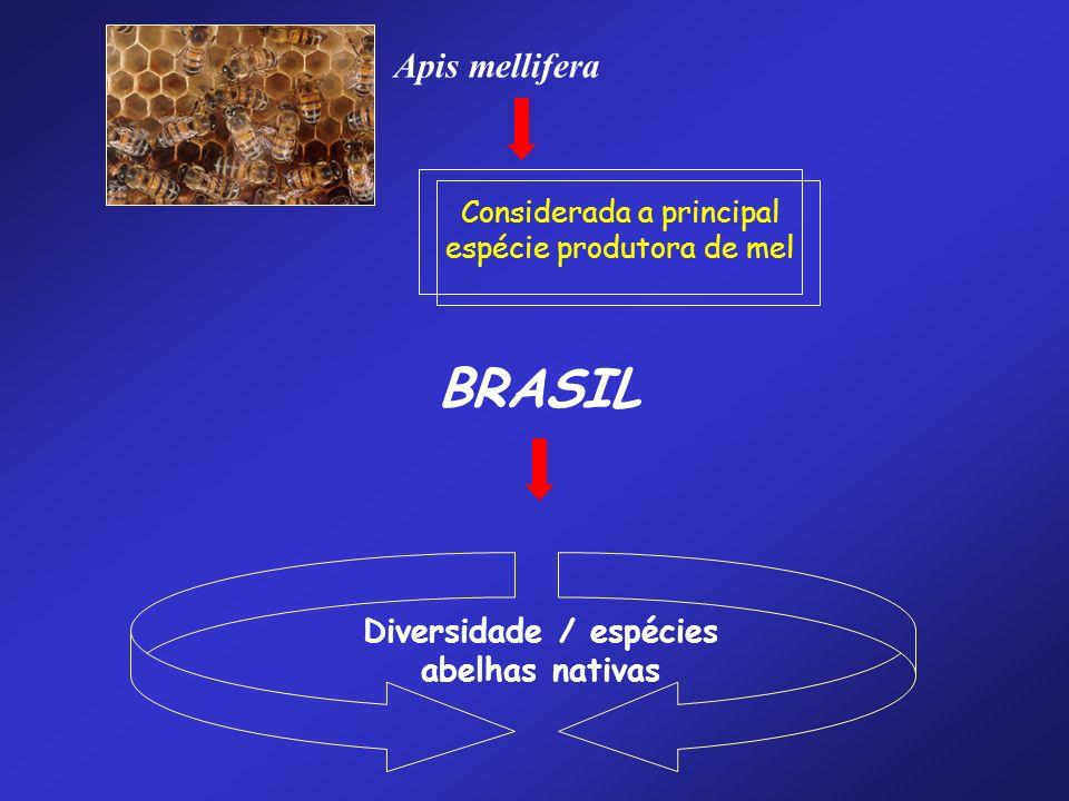 Diversidade / espécies abelhas nativas