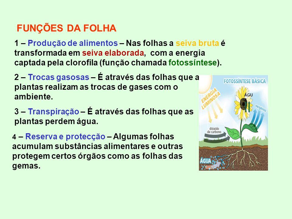 FUNÇÕES DA FOLHA