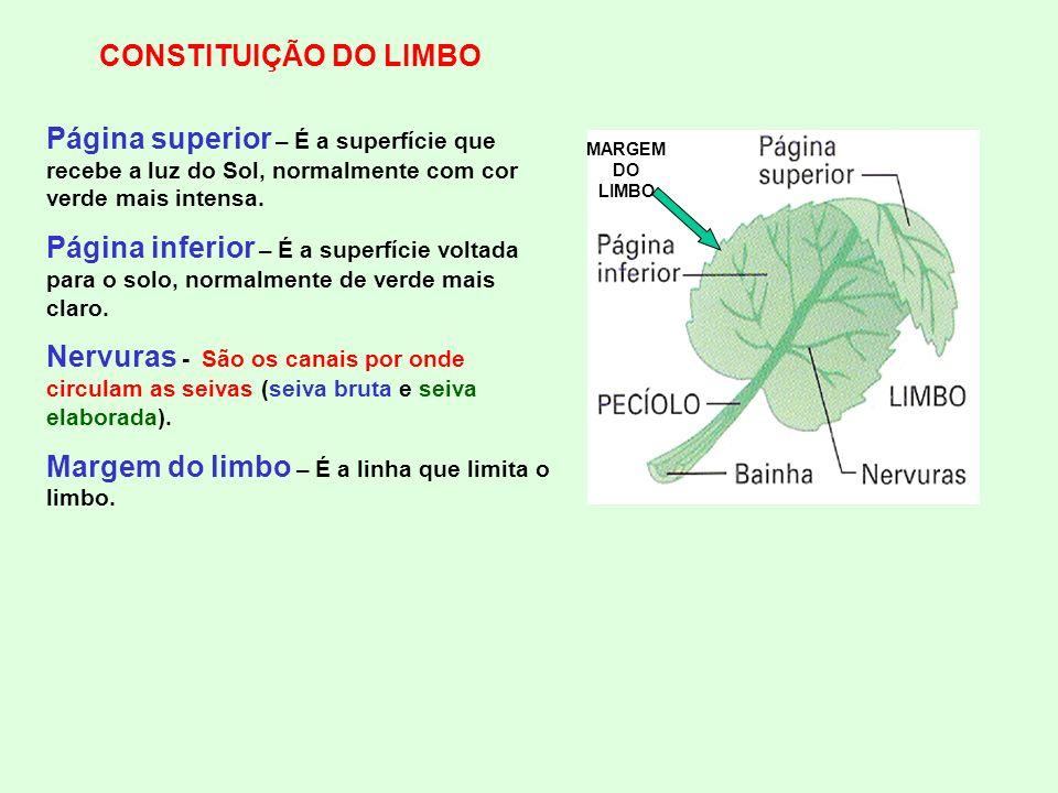 Margem do limbo – É a linha que limita o limbo.