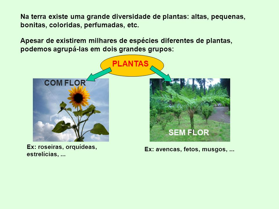 PLANTAS COM FLOR SEM FLOR