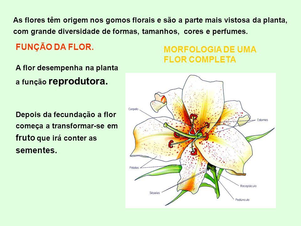 MORFOLOGIA DE UMA FLOR COMPLETA