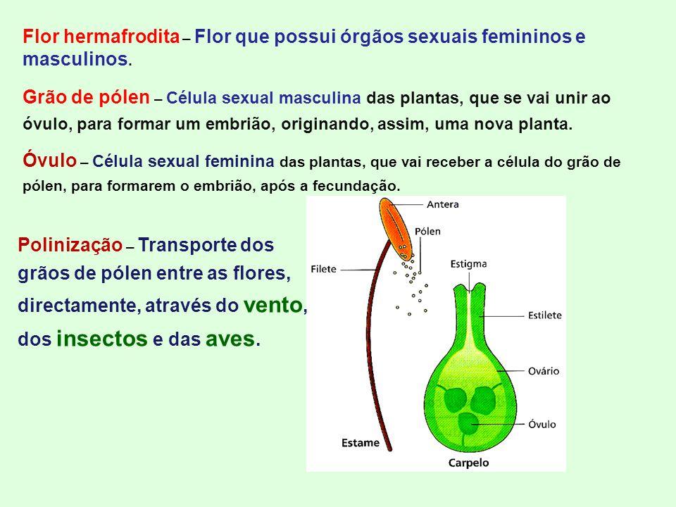 Flor hermafrodita – Flor que possui órgãos sexuais femininos e masculinos.