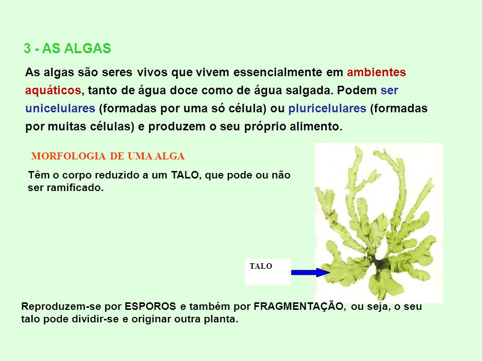 3 - AS ALGAS
