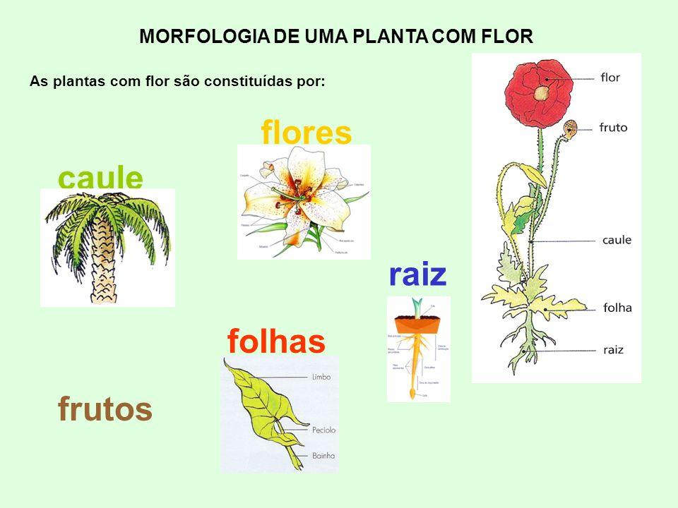 flores caule raiz folhas frutos MORFOLOGIA DE UMA PLANTA COM FLOR