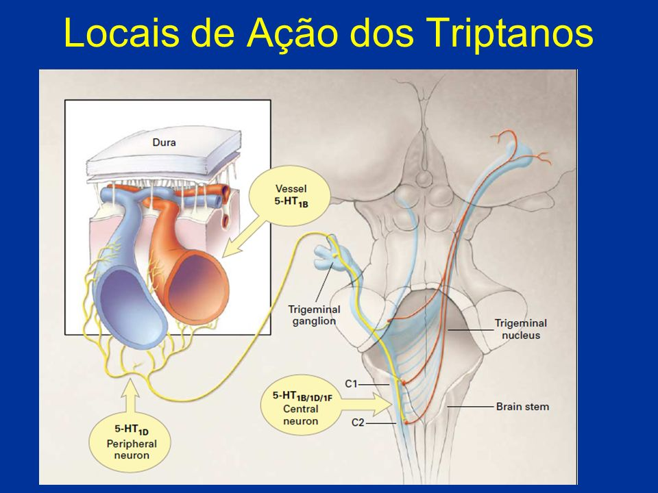 Locais de Ação dos Triptanos