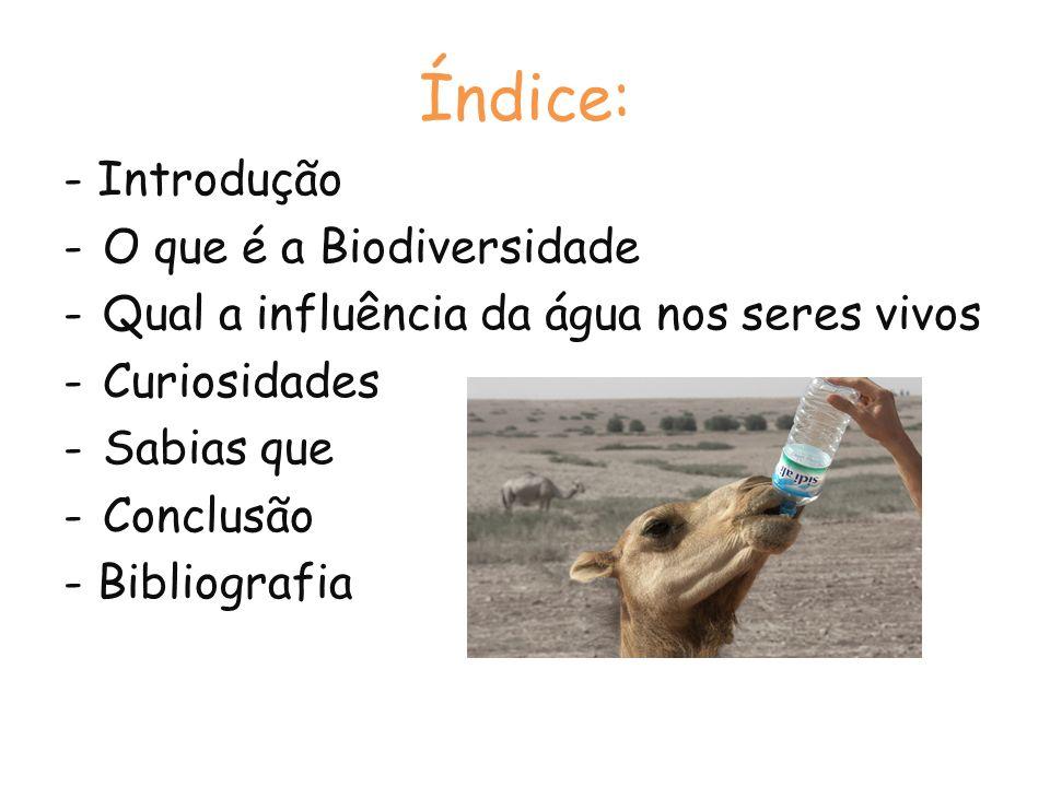 Índice: - Introdução O que é a Biodiversidade