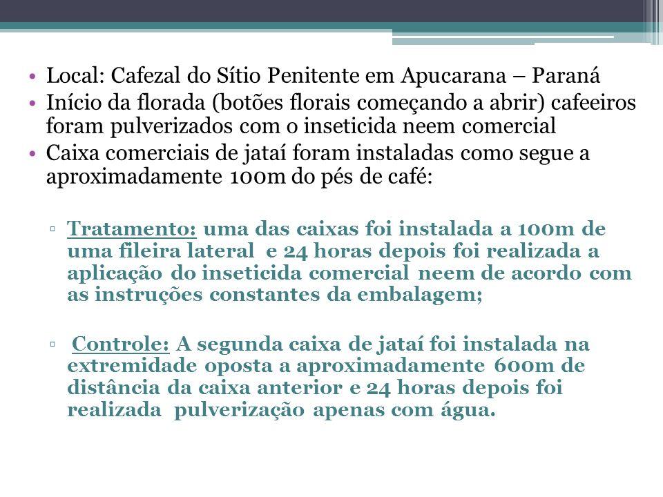 Local: Cafezal do Sítio Penitente em Apucarana – Paraná