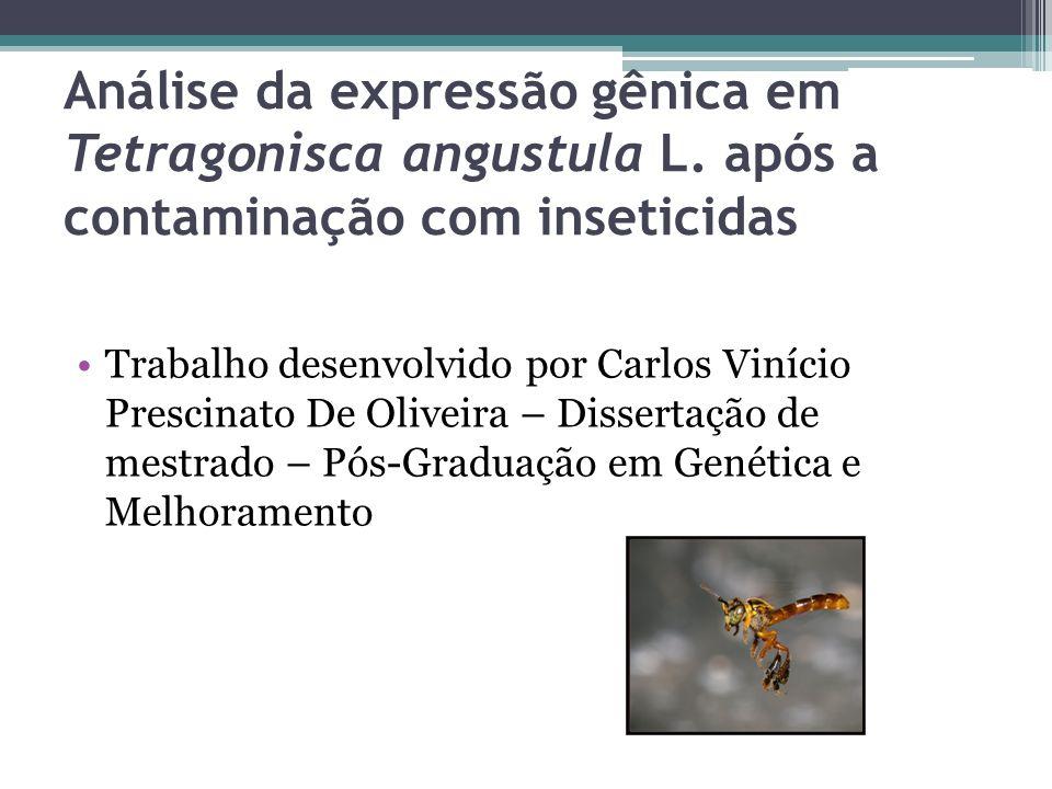 Análise da expressão gênica em Tetragonisca angustula L