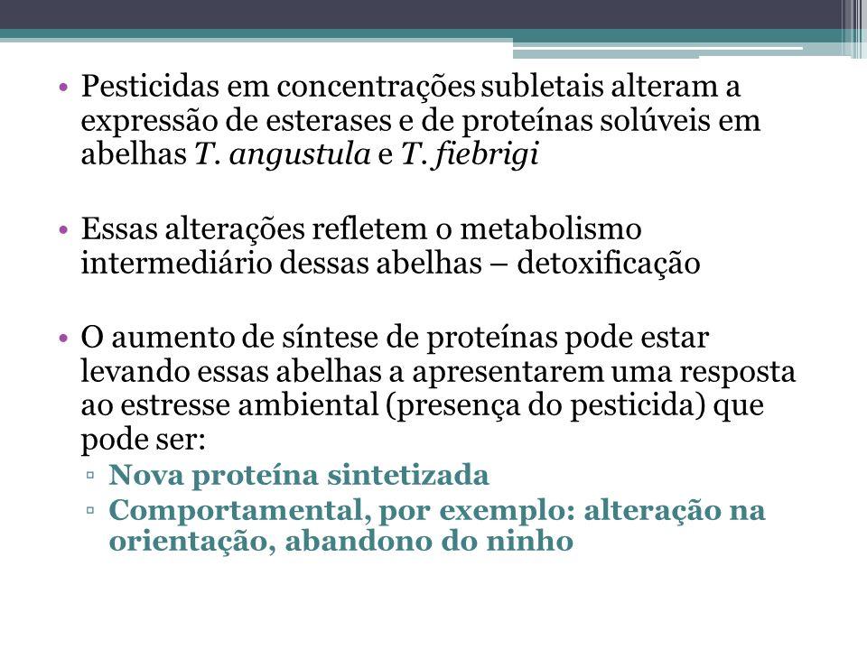Pesticidas em concentrações subletais alteram a expressão de esterases e de proteínas solúveis em abelhas T. angustula e T. fiebrigi