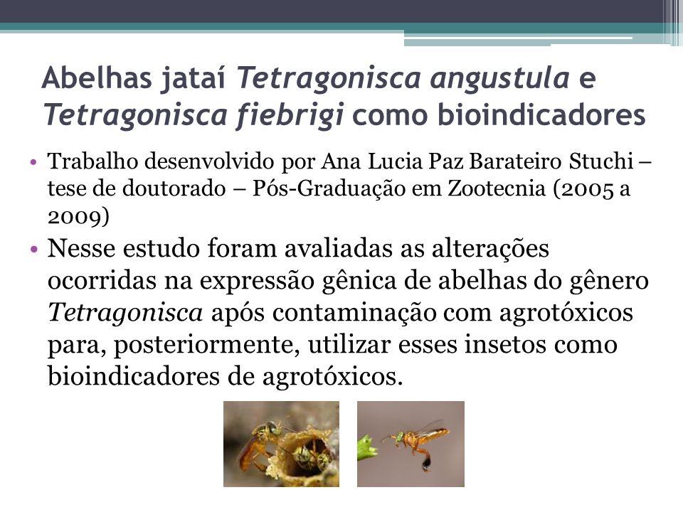 Abelhas jataí Tetragonisca angustula e Tetragonisca fiebrigi como bioindicadores