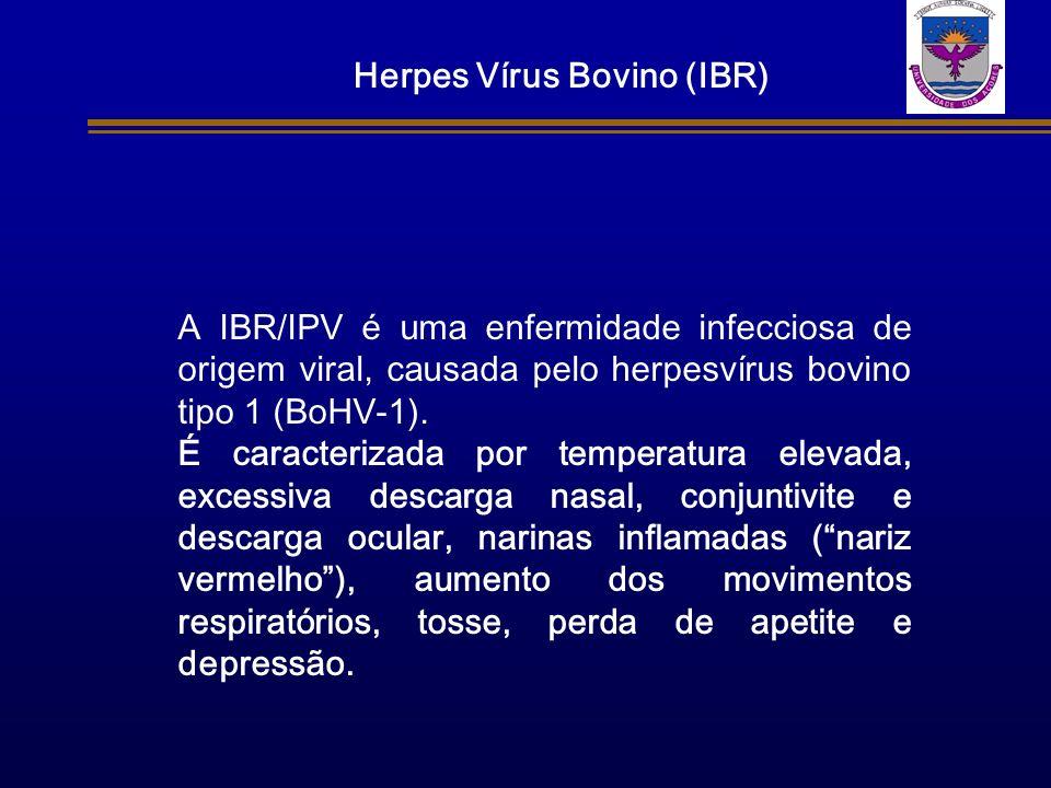 Herpes Vírus Bovino (IBR)