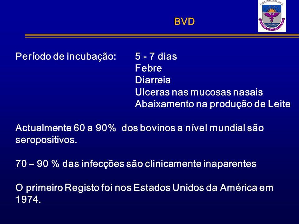 BVD Período de incubação: 5 - 7 dias. Febre. Diarreia. Ulceras nas mucosas nasais. Abaixamento na produção de Leite.