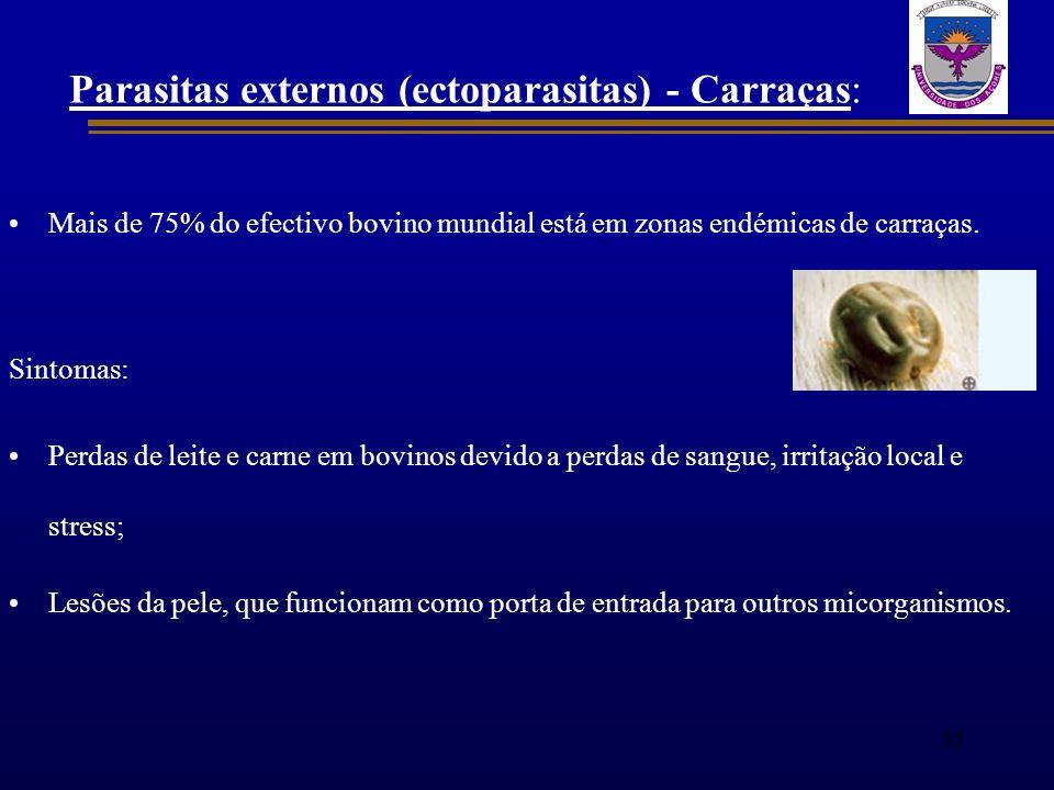 Parasitas externos (ectoparasitas) - Carraças: