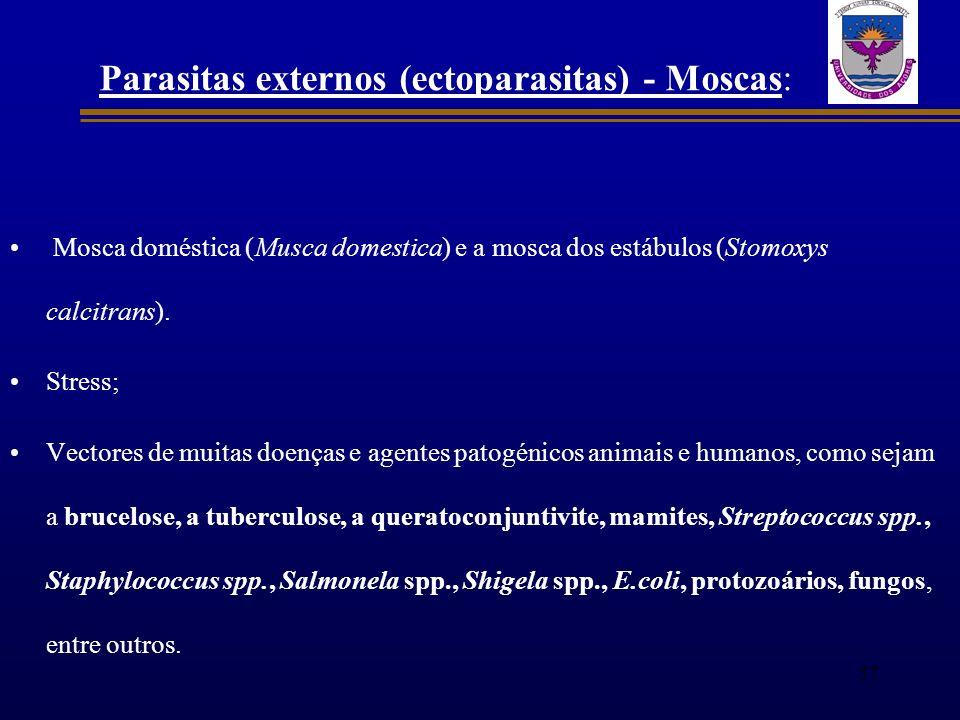 Parasitas externos (ectoparasitas) - Moscas: