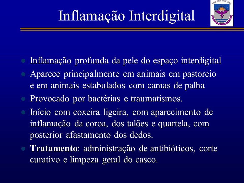 Inflamação Interdigital