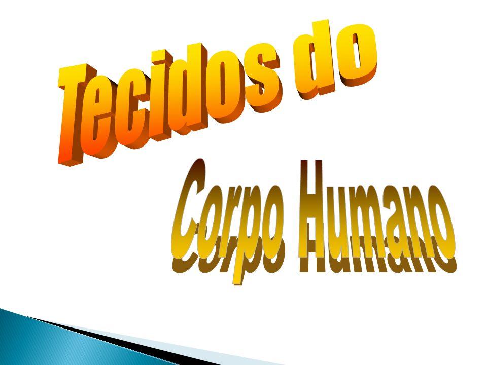 Tecidos do Corpo Humano