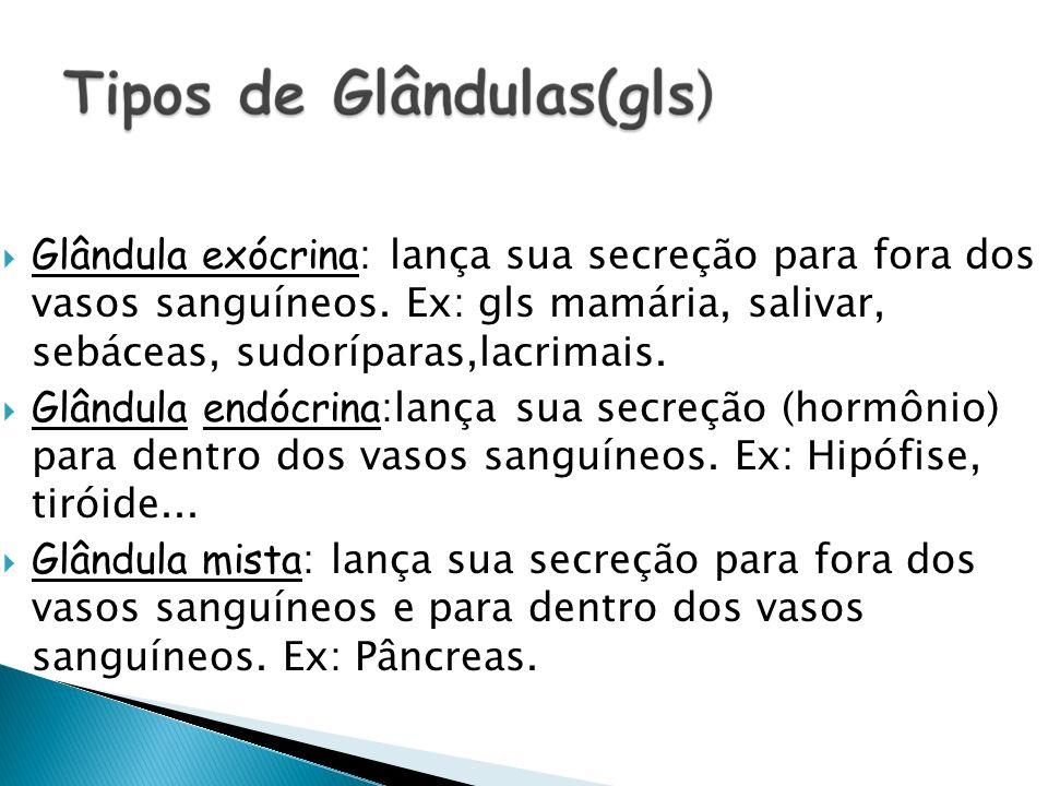 Glândula exócrina: lança sua secreção para fora dos vasos sanguíneos