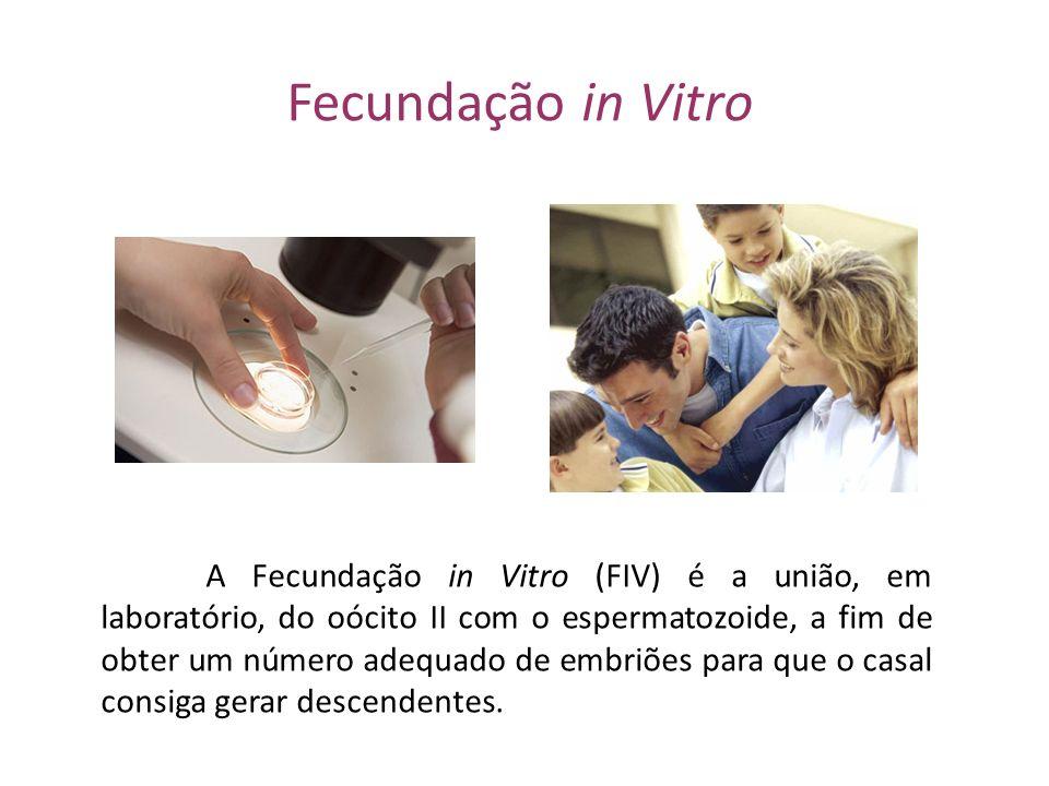 Fecundação in Vitro