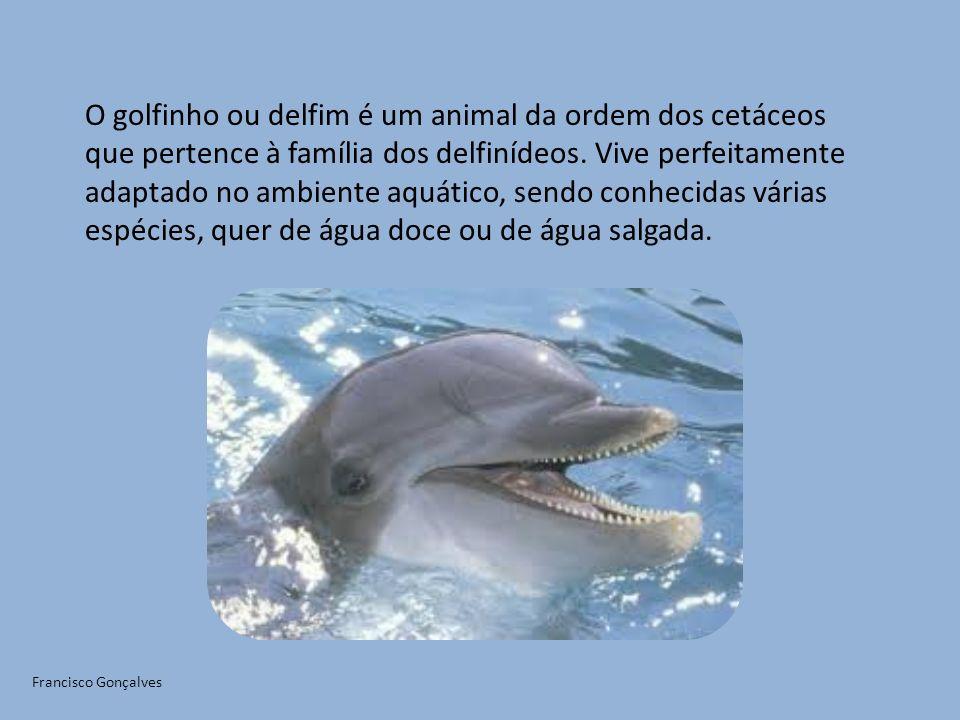 O golfinho ou delfim é um animal da ordem dos cetáceos que pertence à família dos delfinídeos. Vive perfeitamente adaptado no ambiente aquático, sendo conhecidas várias espécies, quer de água doce ou de água salgada.