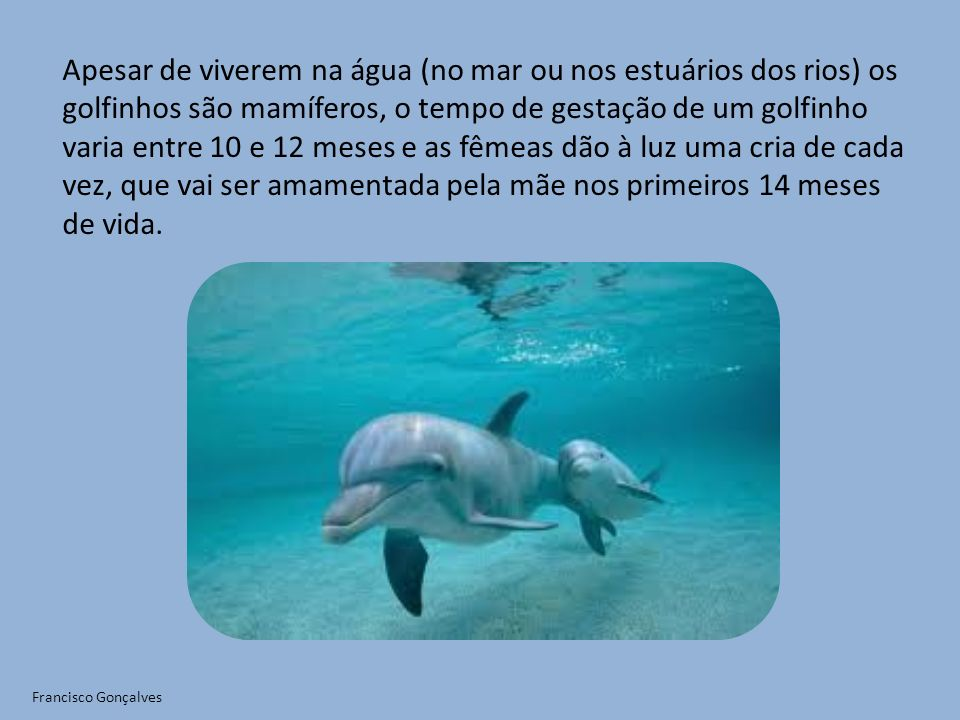 Apesar de viverem na água (no mar ou nos estuários dos rios) os golfinhos são mamíferos, o tempo de gestação de um golfinho varia entre 10 e 12 meses e as fêmeas dão à luz uma cria de cada vez, que vai ser amamentada pela mãe nos primeiros 14 meses de vida.
