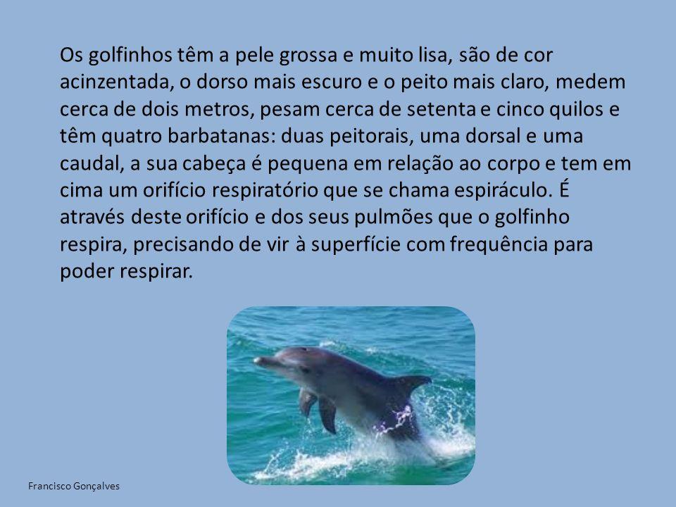 Os golfinhos têm a pele grossa e muito lisa, são de cor acinzentada, o dorso mais escuro e o peito mais claro, medem cerca de dois metros, pesam cerca de setenta e cinco quilos e têm quatro barbatanas: duas peitorais, uma dorsal e uma caudal, a sua cabeça é pequena em relação ao corpo e tem em cima um orifício respiratório que se chama espiráculo. É através deste orifício e dos seus pulmões que o golfinho respira, precisando de vir à superfície com frequência para poder respirar.
