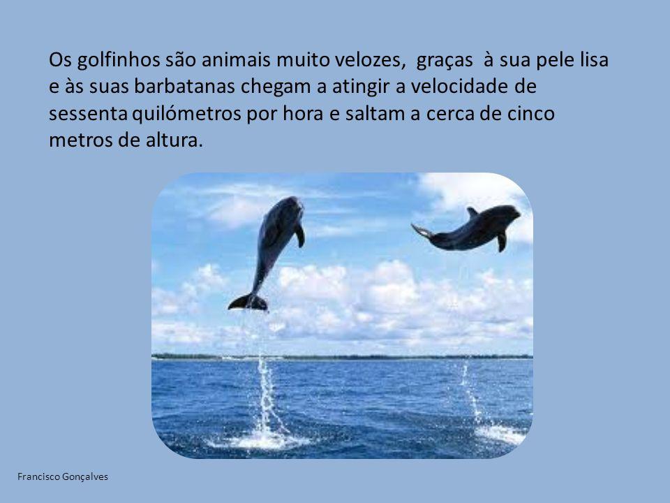 Os golfinhos são animais muito velozes, graças à sua pele lisa e às suas barbatanas chegam a atingir a velocidade de sessenta quilómetros por hora e saltam a cerca de cinco metros de altura.