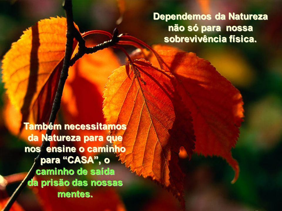 Dependemos da Natureza não só para nossa sobrevivência física.