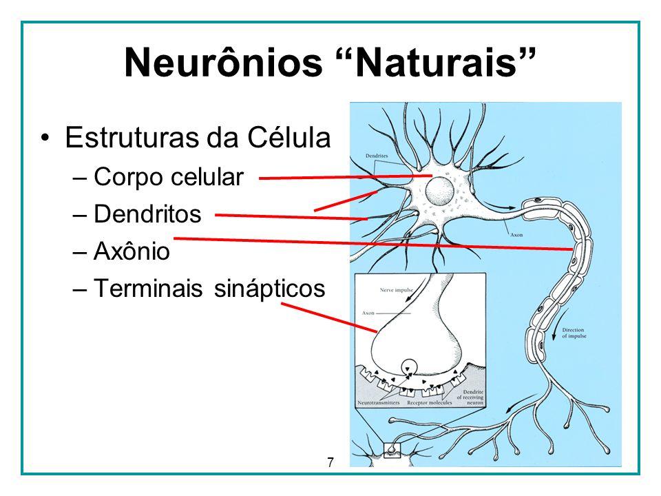 Neurônios Naturais Estruturas da Célula Corpo celular Dendritos