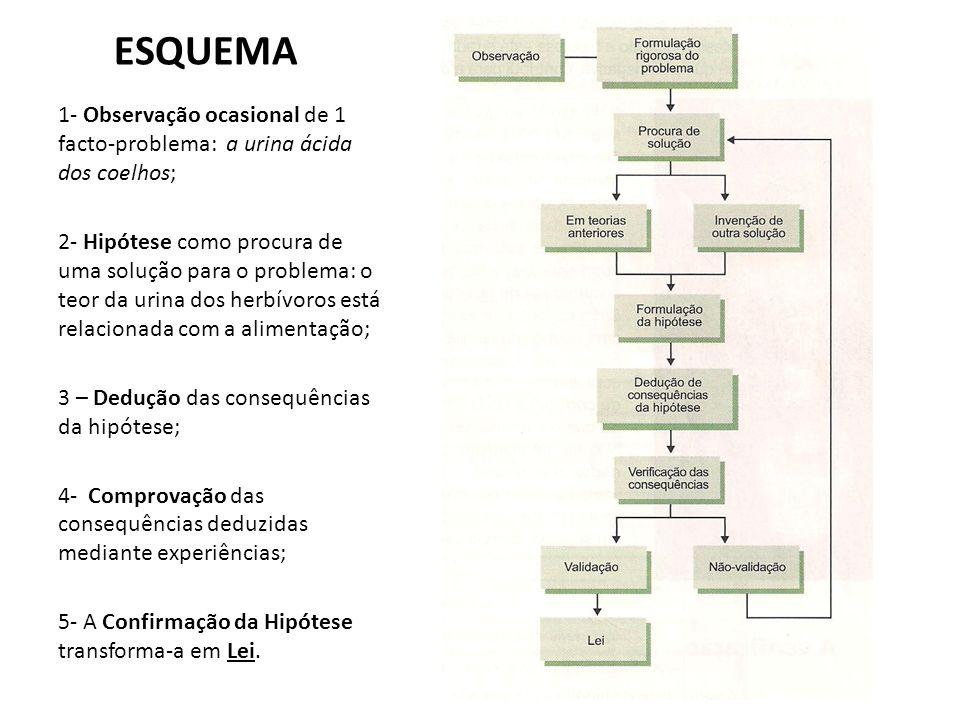 ESQUEMA1- Observação ocasional de 1 facto-problema: a urina ácida dos coelhos;