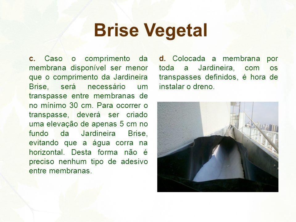 Brise Vegetal