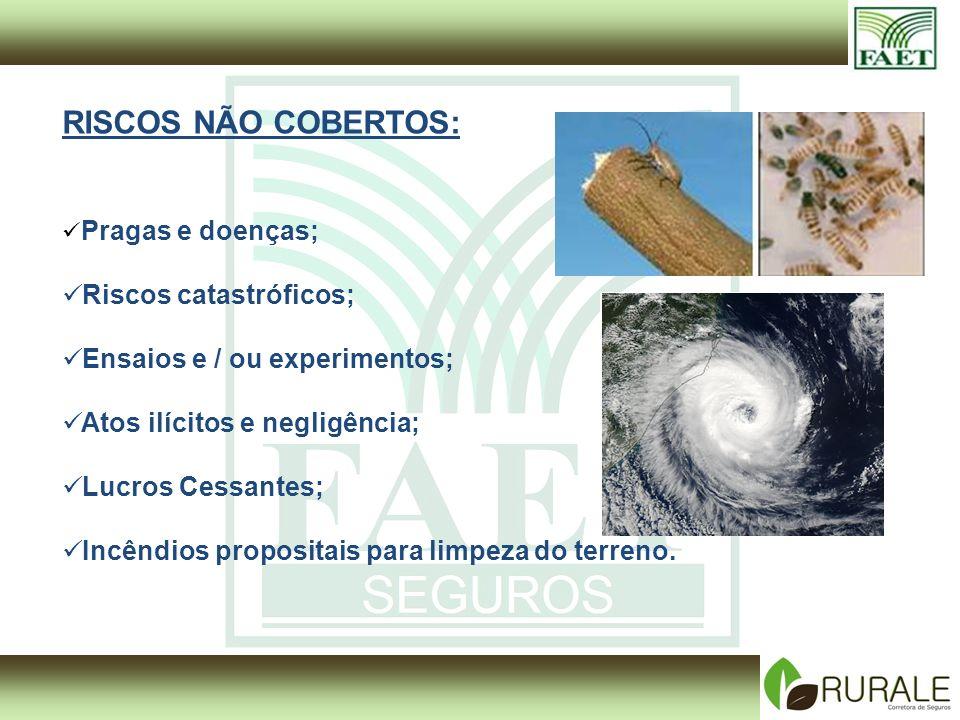 RISCOS NÃO COBERTOS: Riscos catastróficos;