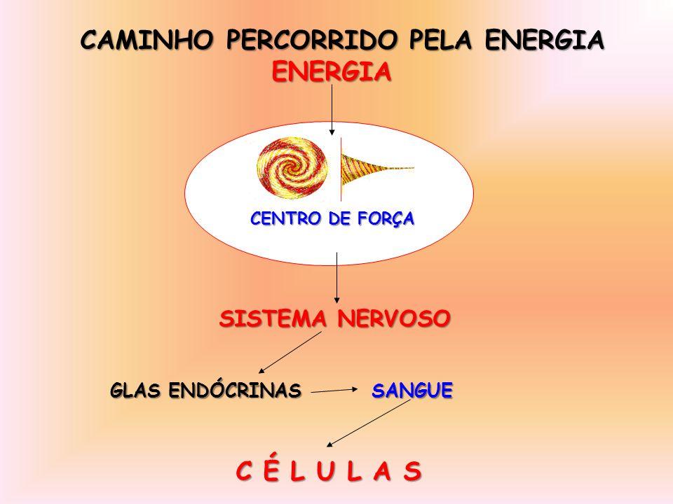 CAMINHO PERCORRIDO PELA ENERGIA