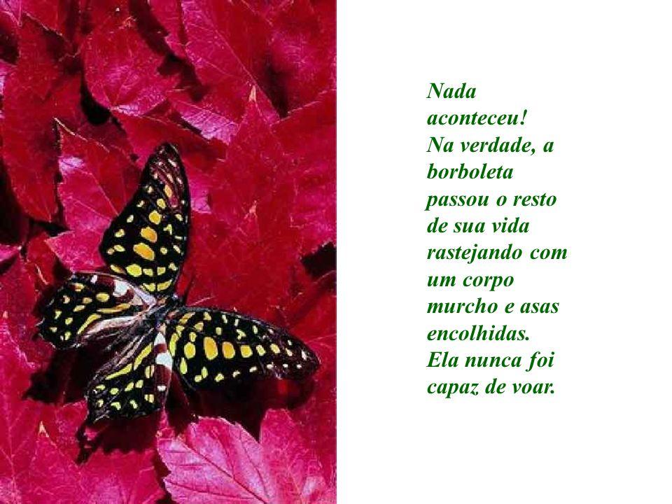 Nada aconteceu! Na verdade, a borboleta passou o resto de sua vida rastejando com um corpo murcho e asas encolhidas.