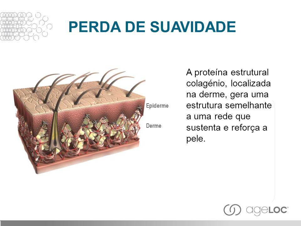 PERDA DE SUAVIDADE A proteína estrutural colagénio, localizada na derme, gera uma estrutura semelhante a uma rede que sustenta e reforça a pele.
