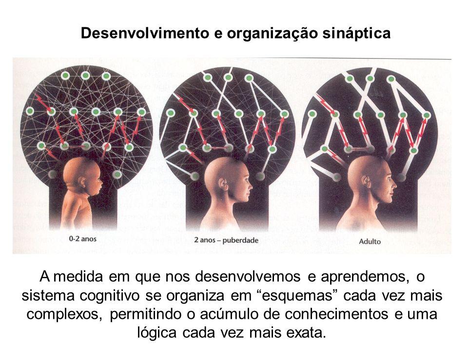 Desenvolvimento e organização sináptica