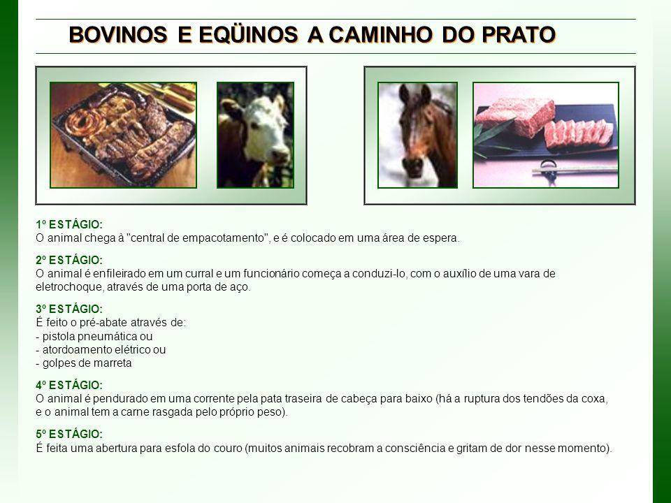 BOVINOS E EQÜINOS A CAMINHO DO PRATO