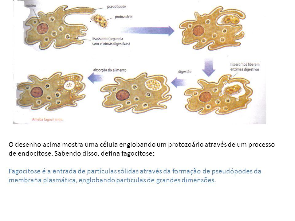 O desenho acima mostra uma célula englobando um protozoário através de um processo de endocitose. Sabendo disso, defina fagocitose: