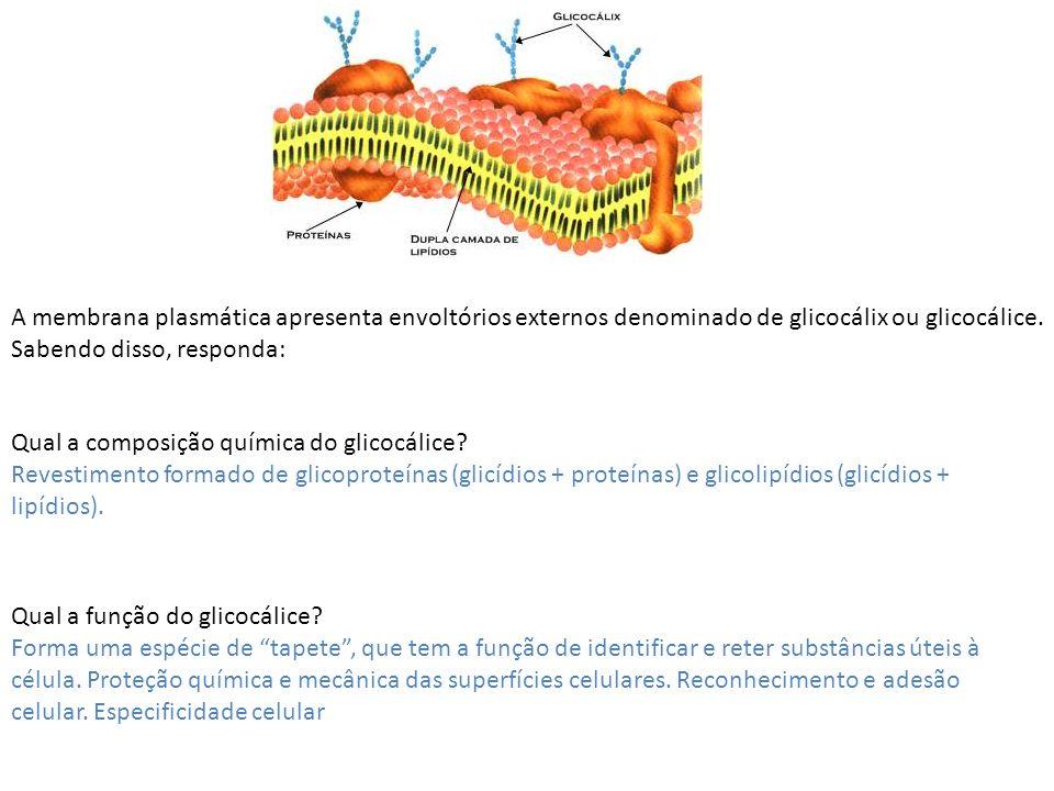 A membrana plasmática apresenta envoltórios externos denominado de glicocálix ou glicocálice. Sabendo disso, responda: