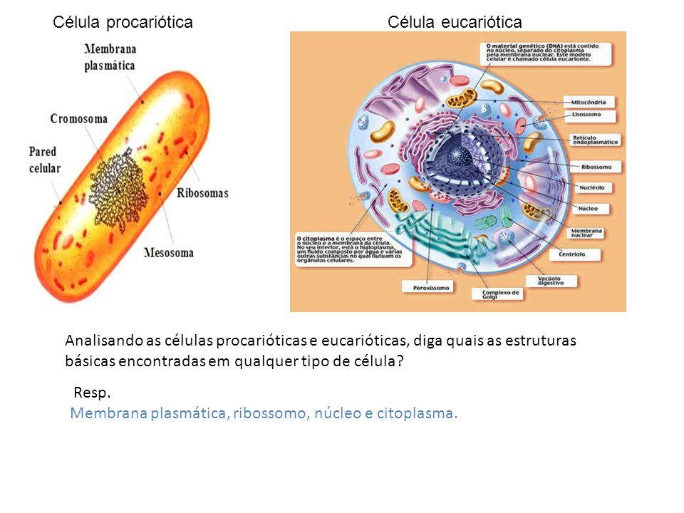 Célula procariótica Célula eucariótica.