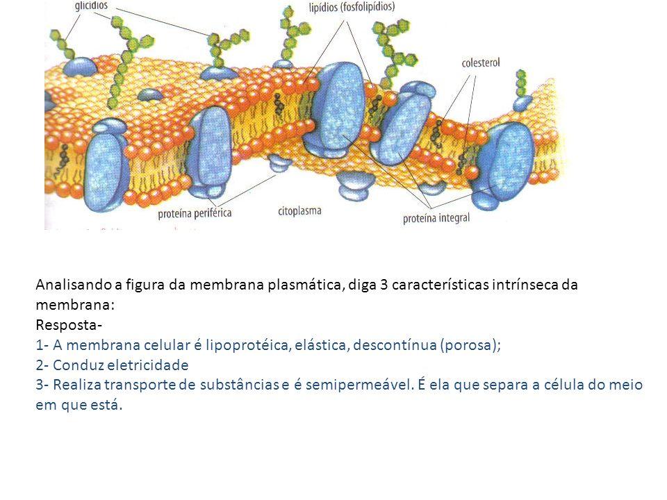 Analisando a figura da membrana plasmática, diga 3 características intrínseca da membrana: