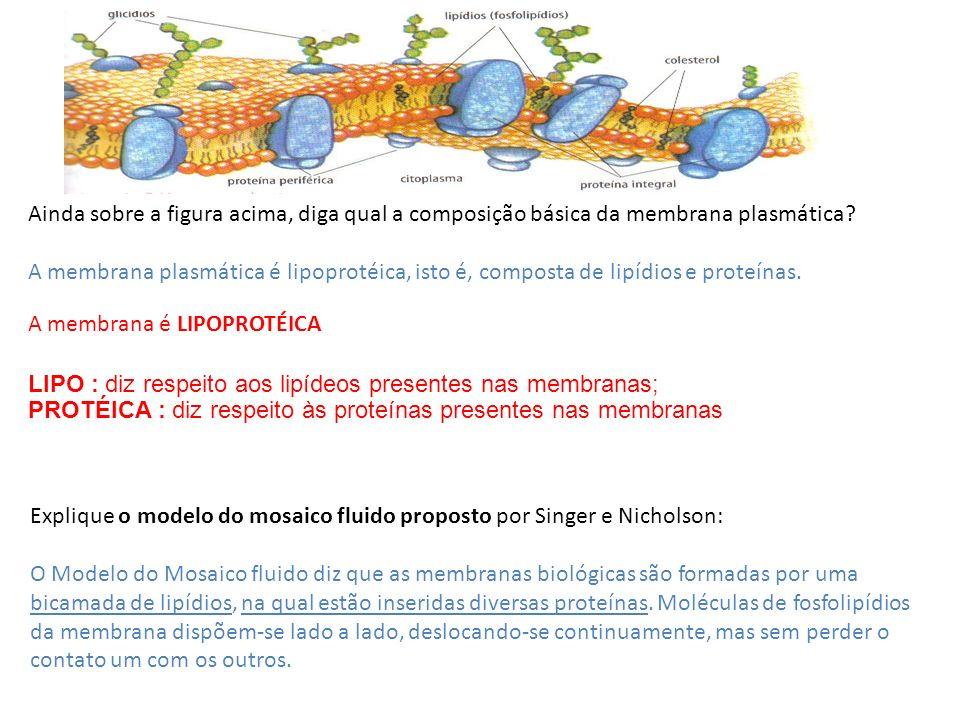 Ainda sobre a figura acima, diga qual a composição básica da membrana plasmática