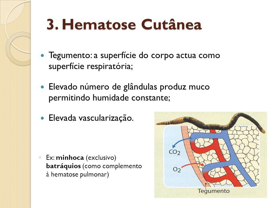3. Hematose Cutânea Tegumento: a superfície do corpo actua como superfície respiratória;