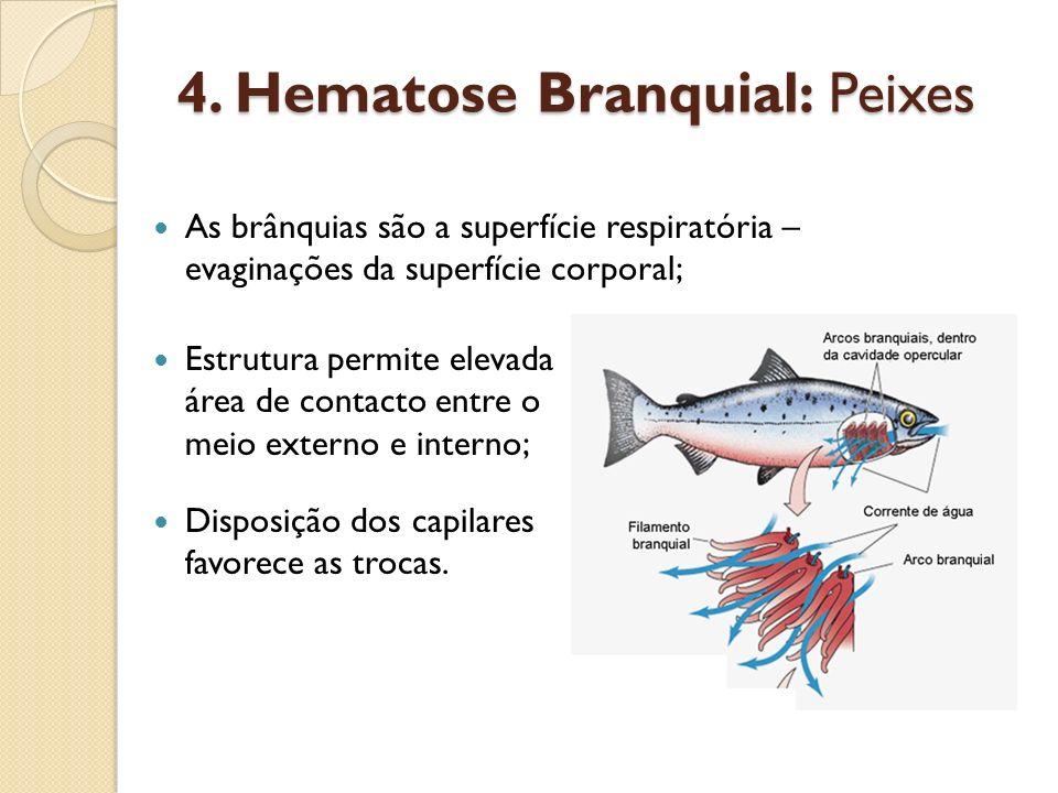 4. Hematose Branquial: Peixes