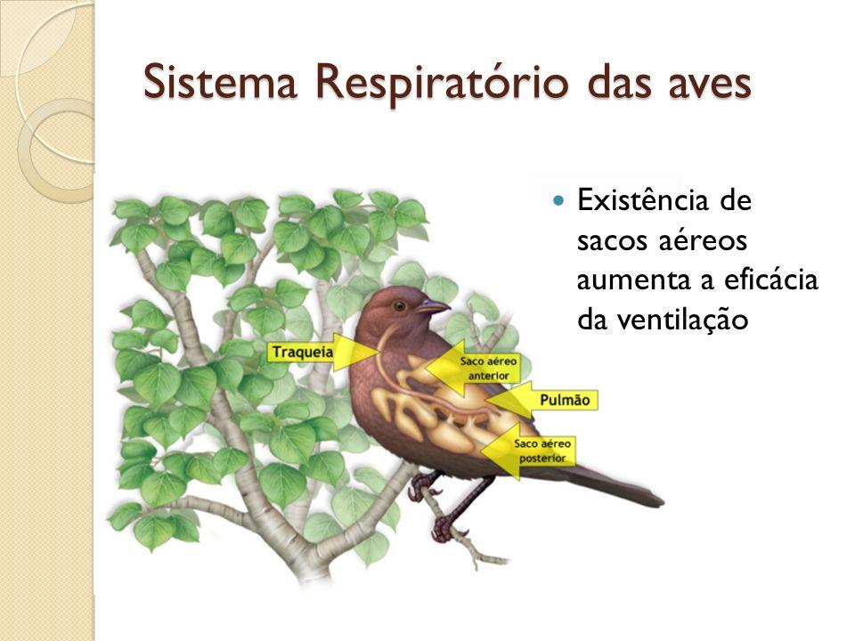 Sistema Respiratório das aves