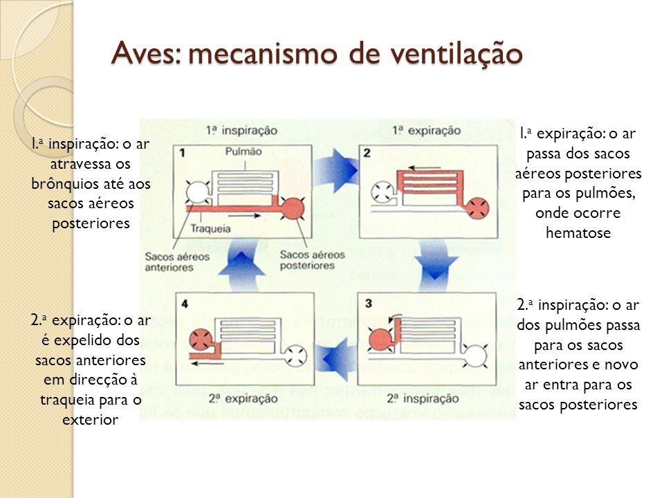 Aves: mecanismo de ventilação