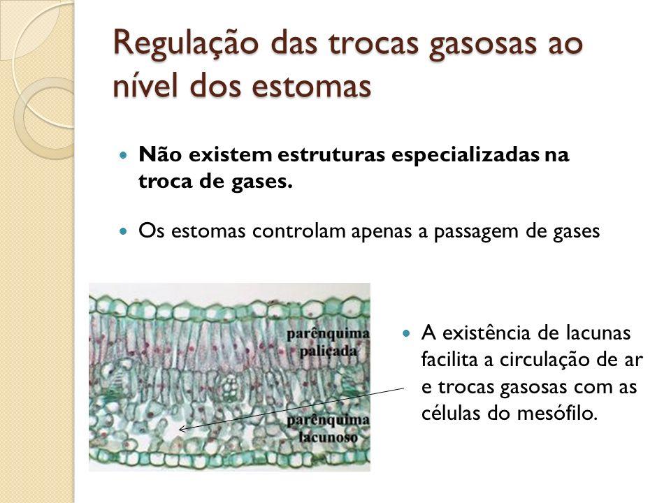 Regulação das trocas gasosas ao nível dos estomas