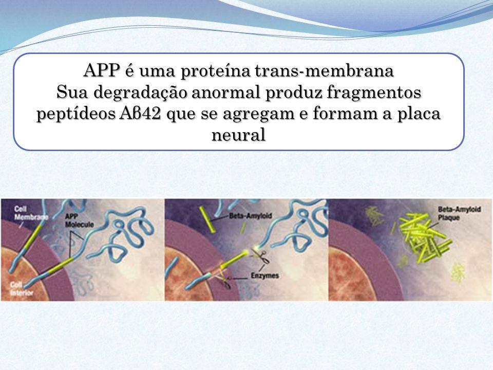 APP é uma proteína trans-membrana