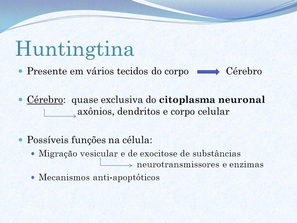 Huntingtina Presente em vários tecidos do corpo Cérebro