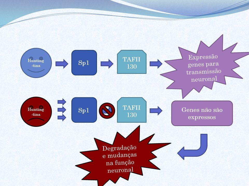 Expressão genes para transmissão neuronal